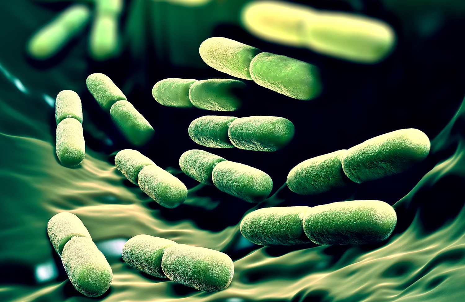 Gut microbiota and immune system function scaled